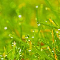 It's a green world by Pamba