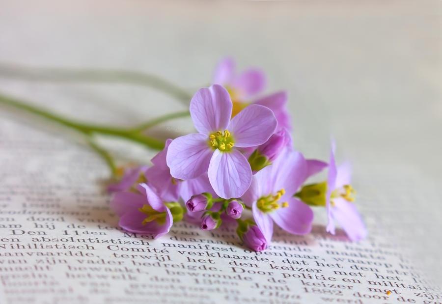 May flowers by Pamba