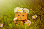 Danbo found some flowers