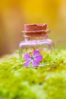 Floralic by Pamba