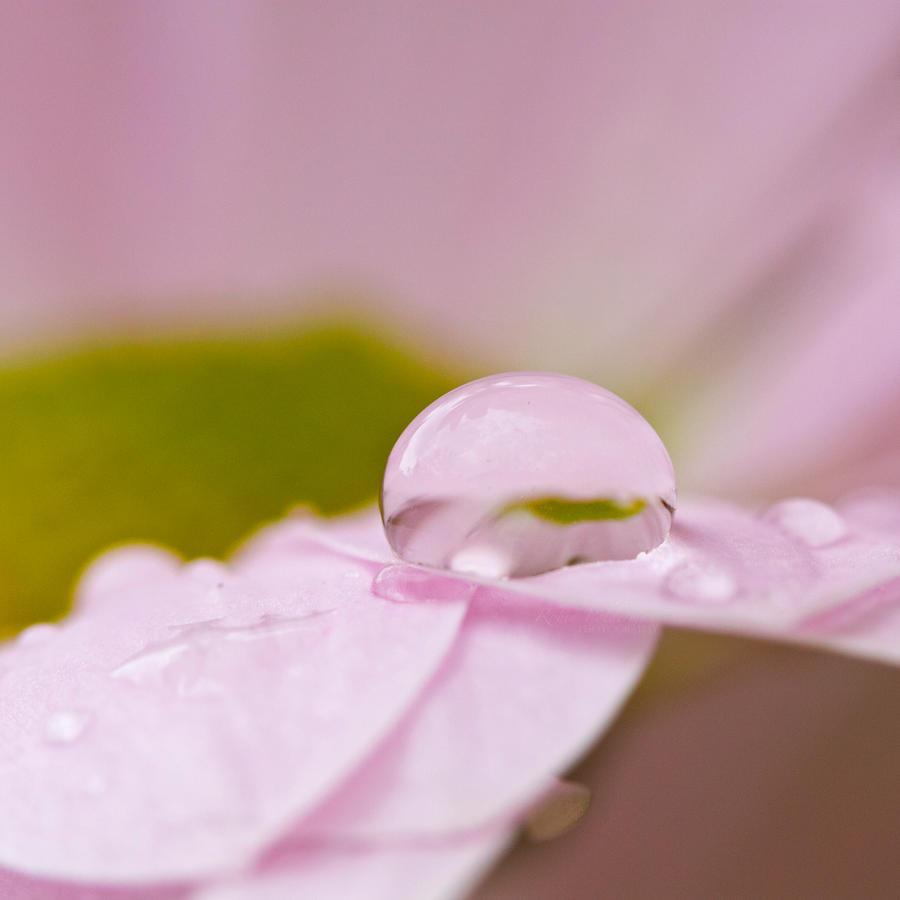 Petal glitter by Pamba