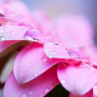 Drop of rain by Pamba