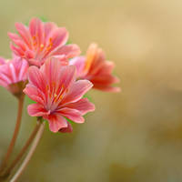 Delicate by Pamba