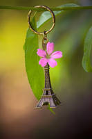 We went to France by Pamba