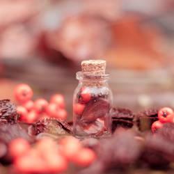 Autumn Bottle by Pamba
