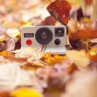 Polaroid love by Pamba