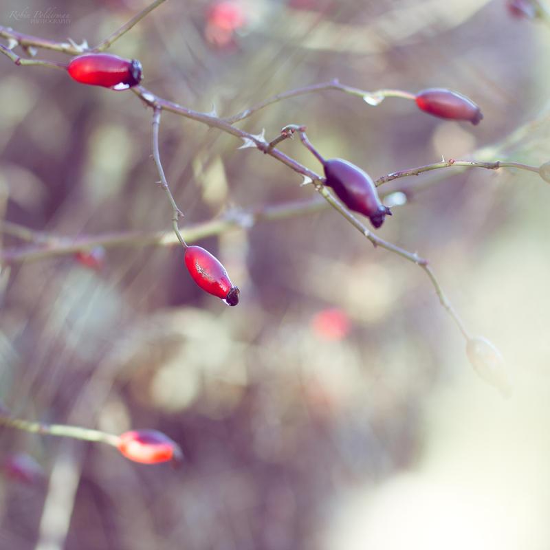 Whispering autumn