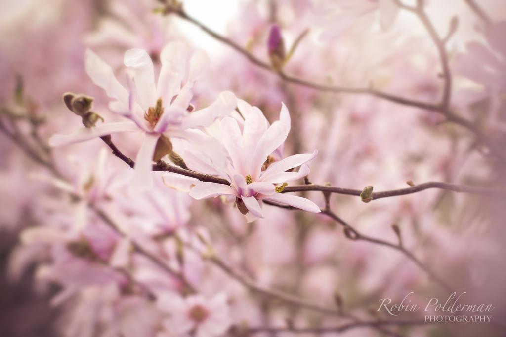 Magic pink by Pamba