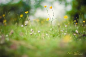 Summer days by Pamba