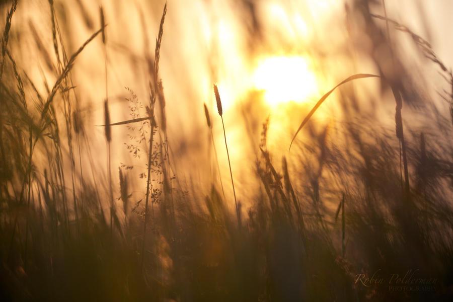 Summer sunset by Pamba