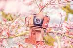 Photography season