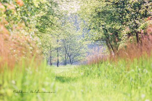 Dreams full of nature