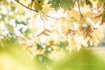 Treasures of autumn