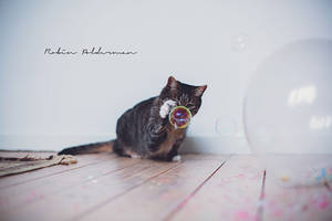 bubble playing