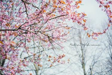 Wild cherries by Pamba