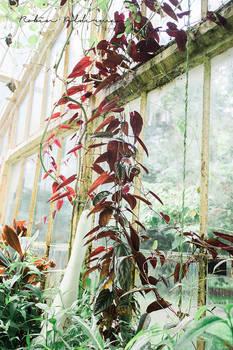 Botanical green