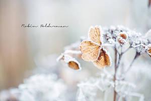 Frozen hearts by Pamba