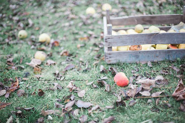 An apple a day.. by Pamba