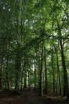 Stock - Among the trees