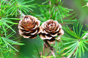 Wooden Roses by MaresaSinclair