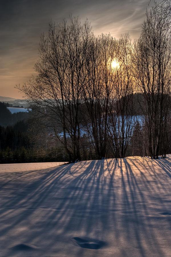 Sunset trees by Yupa