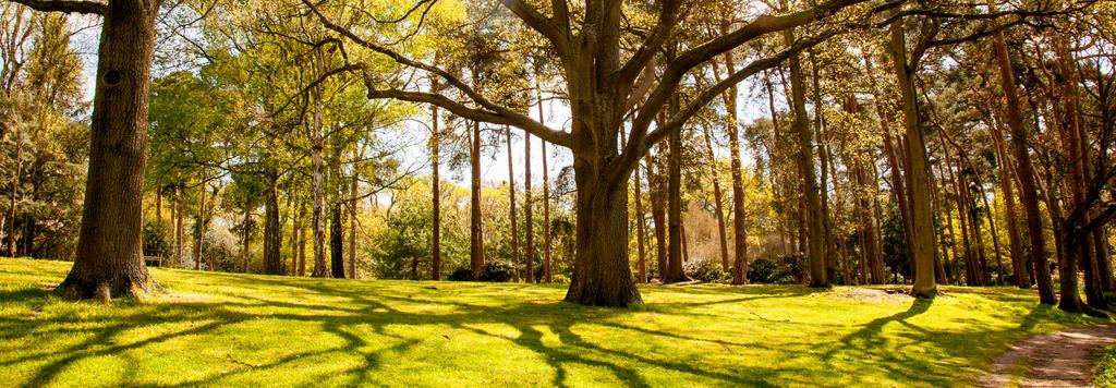 In the woods by bobjenkin