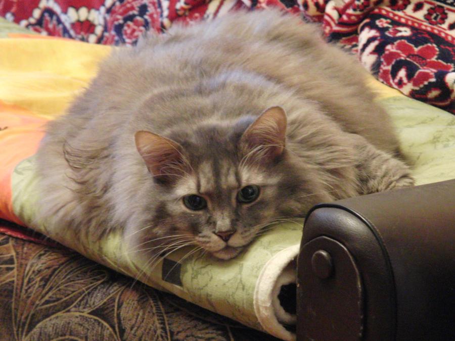 .:Big laaaaazy cat:. by Frosty-Hedge