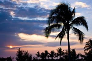 Hawaii VIII