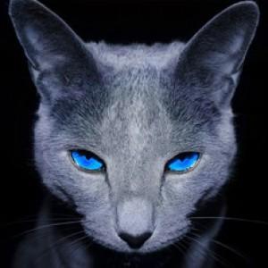 smrt13's Profile Picture