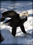 Not So Regal Eagle by DevilChildVorn