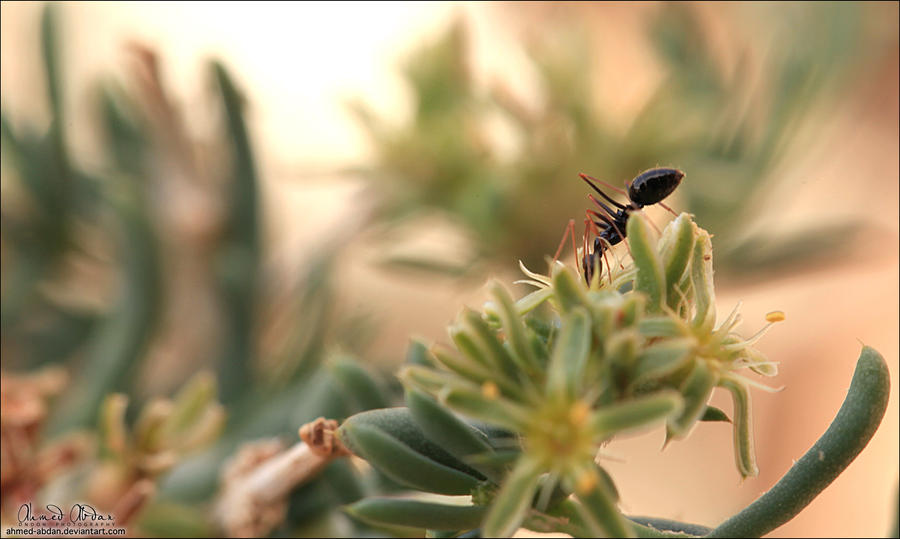 نملة تصوير مايكرو