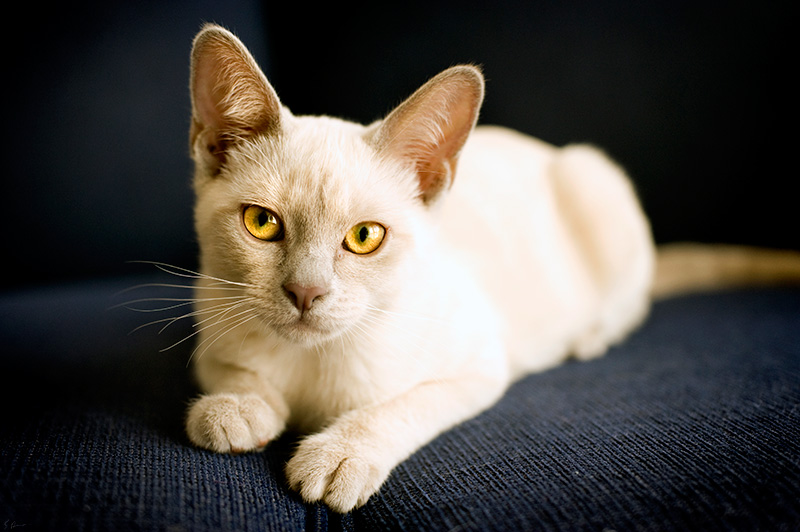 Cat by heeeeman