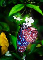 Blue Butterfly by heeeeman