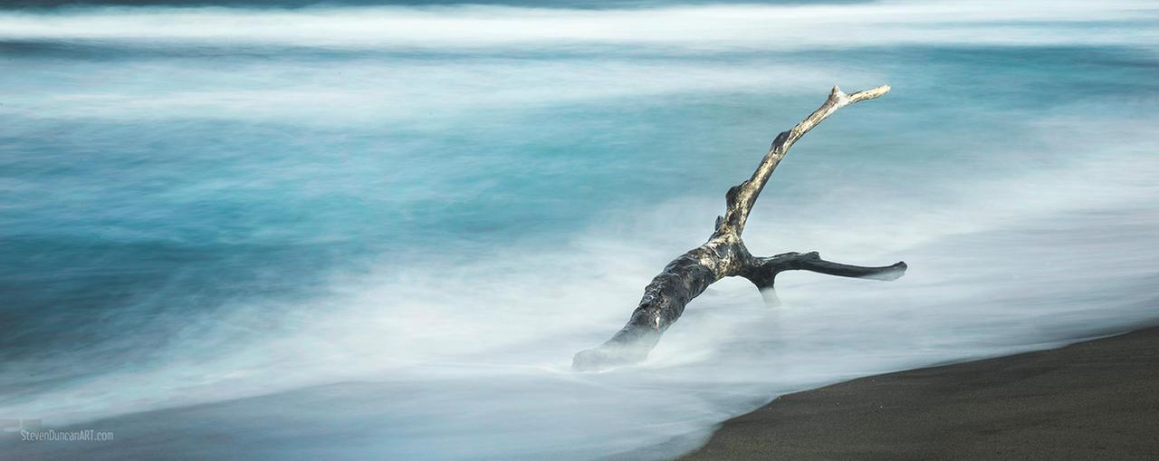 Tree in Fiji by heeeeman