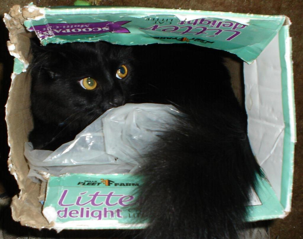 Litter Box Stowaway! by ice-queen-blue
