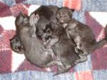 Fur Ball Pile