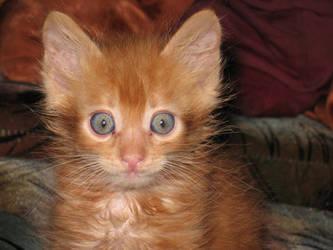 scardy cat by infestedkarigan