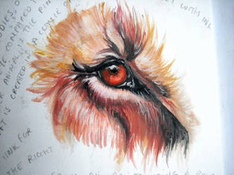 lion eye by sophi--e