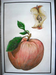 bramley apple by sophi--e