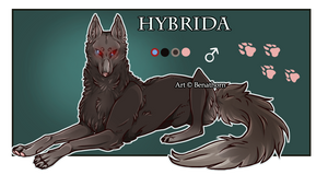 Imperial Jader - Hybrida [Auction- CLOSED]