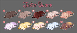 Bean Batch #8 (CLOSED)