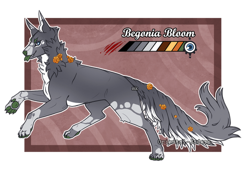 Domestic Jader - Begonia Bloom [Auction - CLOSED]