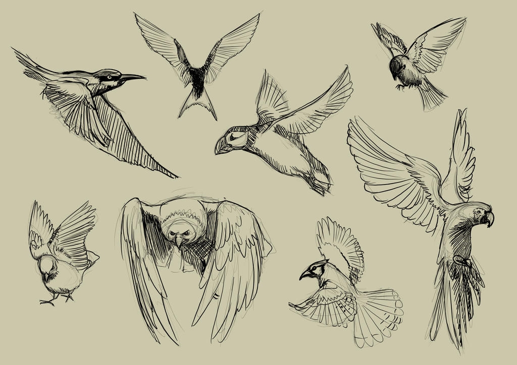 Line Art Of Birds : Birds free clipart public domain vectors