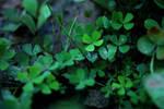 lucky path