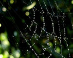 water web.2