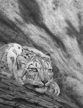On the Edge....Snow leopard in Pencil
