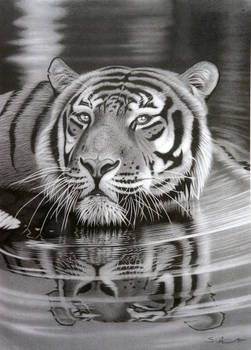 Cool for Cats.... Pencil drawing