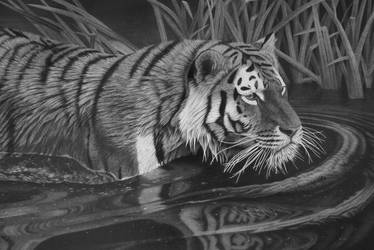 Tiger by StephenAinsworth