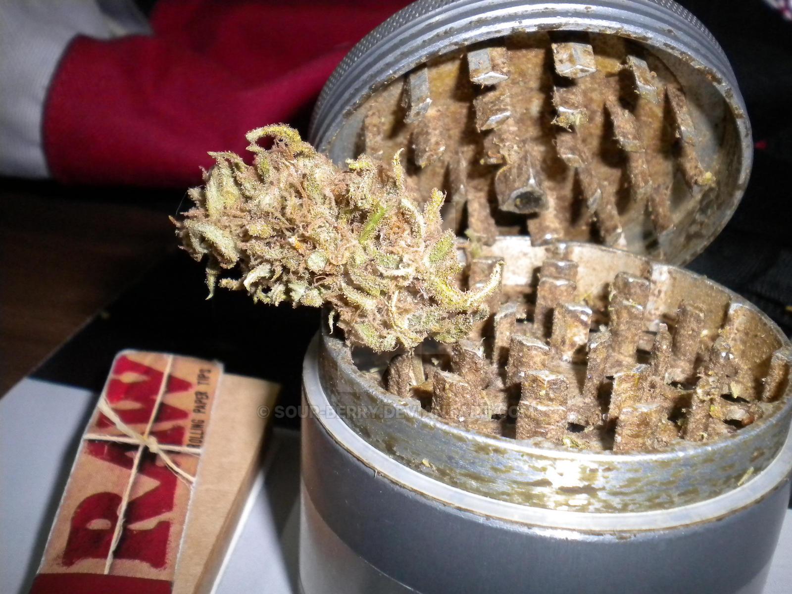 Sour Diesel Nature S Best