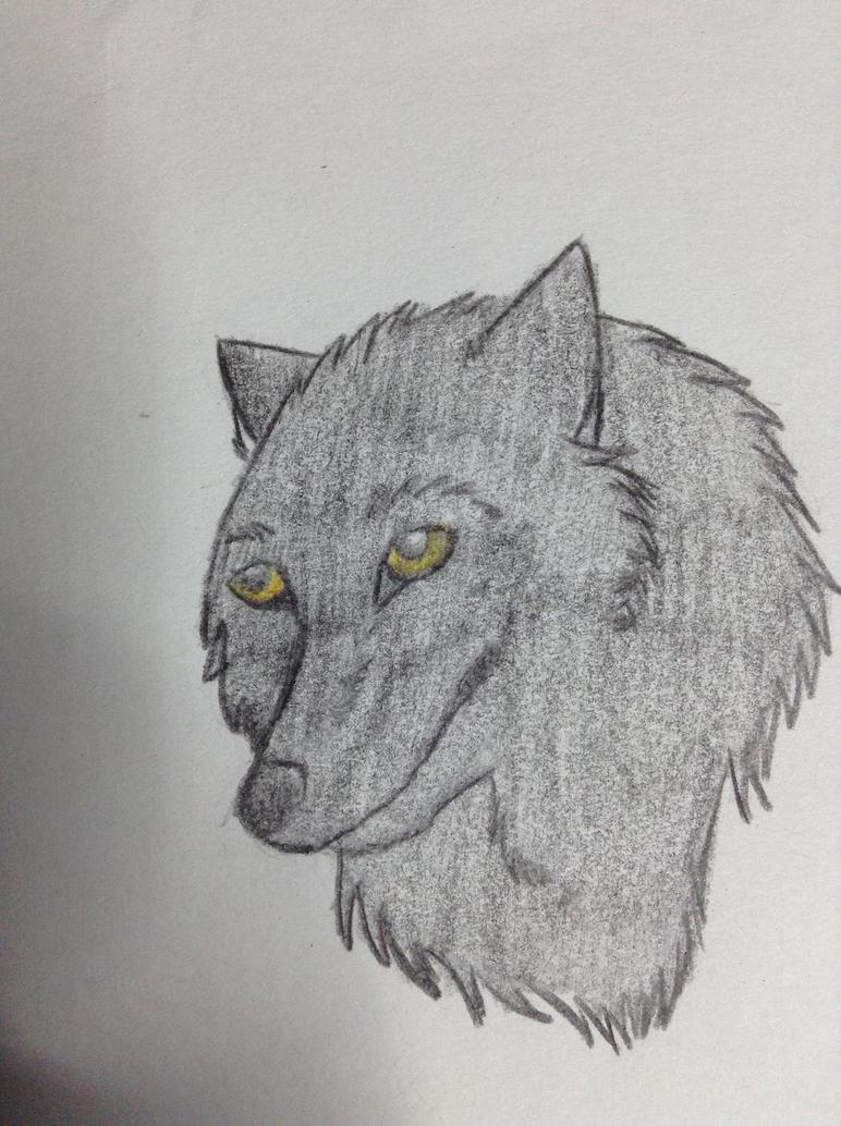 Black Wolf by nitalla